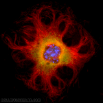 Funky Cell