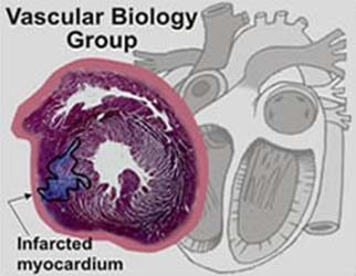 research_vascular_lg1 featured